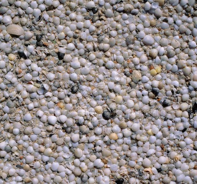 Đến Australia dạo bước trên bãi biển vỏ sò - Ảnh 6.