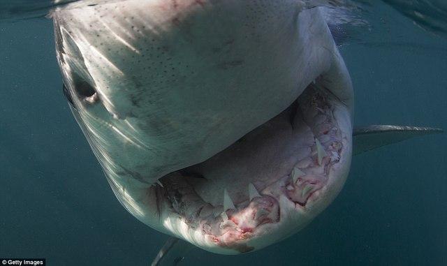 Đi du lịch phải cẩn thận trước những loài vật đáng sợ này - Ảnh 7.