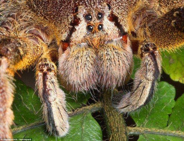 Đi du lịch phải cẩn thận trước những loài vật đáng sợ này - Ảnh 8.