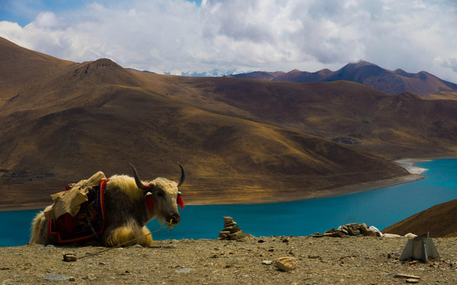 Nếu bạn từng lên voi xuống chó, sẽ thấy nhân tình thế thái vô thường ở Tây Tạng - Ảnh 8.