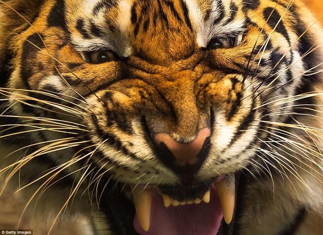 Đi du lịch phải cẩn thận trước những loài vật đáng sợ này - Ảnh 5.