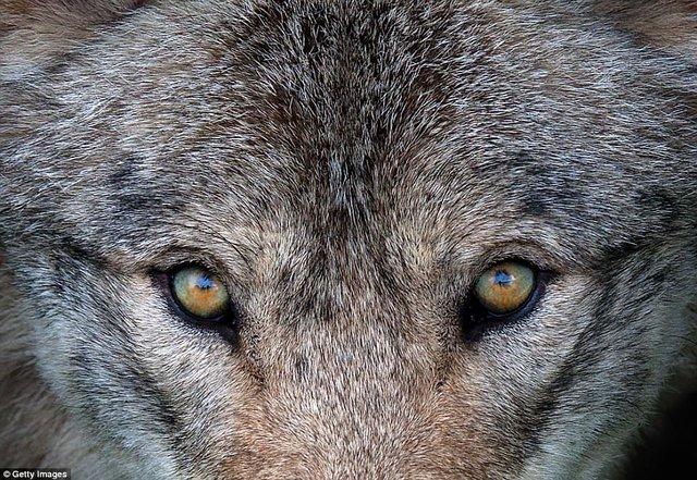 Đi du lịch phải cẩn thận trước những loài vật đáng sợ này - Ảnh 22.