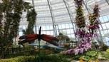 Vinpearl Land Nha Trang mở cửa Đồi vạn hoa với hàng ngàn 'kỳ hoa, dị thảo'