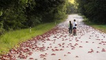 45 triệu con cua Đỏ  lổm ngổm bò từ rừng ra biển ở đảo Phục sinh để sinh con