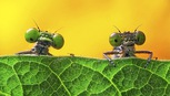 Ảnh động vật đẹp như tranh trong cuộc thi chủ đề 'Thế giới ẩn'