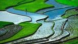 Ruộng bậc thang ở Việt Nam trong top 'cảnh quan đẹp nhất'