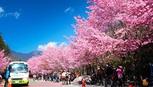 Kinh nghiệm du lịch tự túc Đài Loan