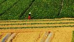 Ngây ngất cảnh sắc Phú Yên trong Tôi thấy hoa vàng trên cỏ xanh