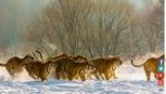 Chùm ảnh mùa đông khắp thế giớiđẹp nao lòng