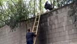 Khách Trung Quốc trốn vé leo tường sở thú gặp... khu thả cọp