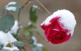 Tuyết đầu mùa khắp châu Âu, Mỹ