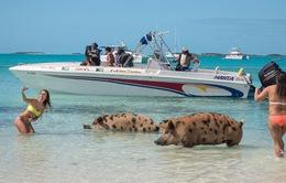 Đến đâu để vừa được tắm biển vừa ôm thú cưng? (Phần 1)