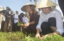 Sinh viên Na Uy đến Việt Nam thử tài làm nông