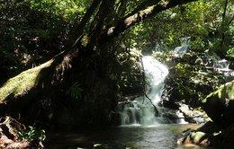 Ngắm thác Thiên Thai, cây thông 1.000 tuổi