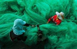 """""""May lưới đánh cá"""" đoạt giải nhất thi ảnh Smithsonian 2014"""