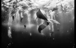 Độc đáo ảnh du lịch đoạt giải 2015 của National Geographic