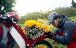 Đi Bảo Lộc đón mùa hoa dã quỳ