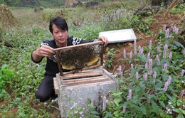 Mùa mật ong bạc hà