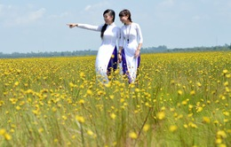 Mê đắm cánh đồng hoa hoàng đầu ấn