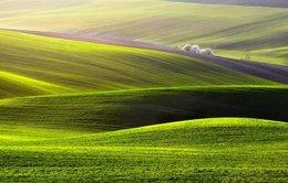 Choáng ngợp những cánh đồng như sóng lượn ở châu Âu