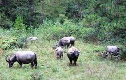 Lâm Đồng xây dựng Safari 1.000 tỉ đồng