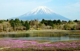 Những điểm ngắm núi Phú Sĩ tuyệt đẹp vào xuân