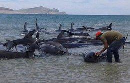 24 cá voi mắc cạn chết ở Mexico