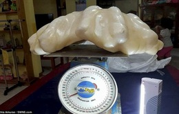 Ngỡ ngàng khối ngọc trai 100 triệu USDnặng 34kg ở Philippines