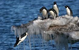 Nga nhượng bộ, thế giới có được khu bảo tồn biển lớn nhất