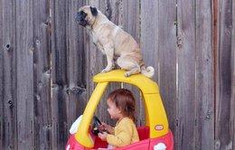 Du lịch bốn phương cùng chó cưng
