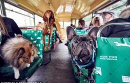 Tour du lịch dành cho chó đầu tiên trên thế giới