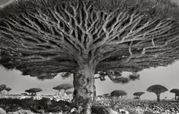 Ảnh rừng cây cổ xưa nhất thế giới đầy ấn tượng