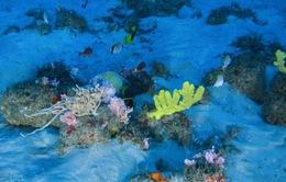 Ngắm rạn san hô ngầm Amazon đẹp lạ thường
