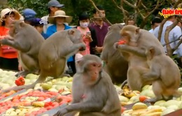 Ra Nha Trang ngắm khỉ ăn dưa hấu dịp tết Đinh Dậu