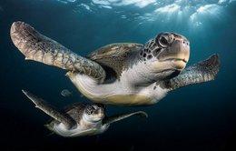 Khám phá đại dương qua ảnh đoạt giải 2017