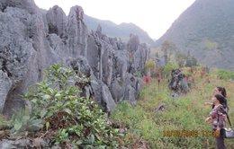 Biển cạn Lũng Pù trên cao nguyên đá