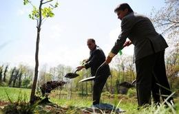 Trồng 66 triệu cây xanh trong 12 giờ