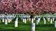 Những nghĩa trang nên đến thăm... trước khi chết!