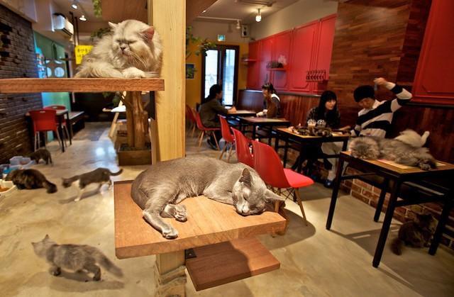 Đi Nhật uống ở quán cà phê hầu gái, cà phê ngâm chân... - Ảnh 2.